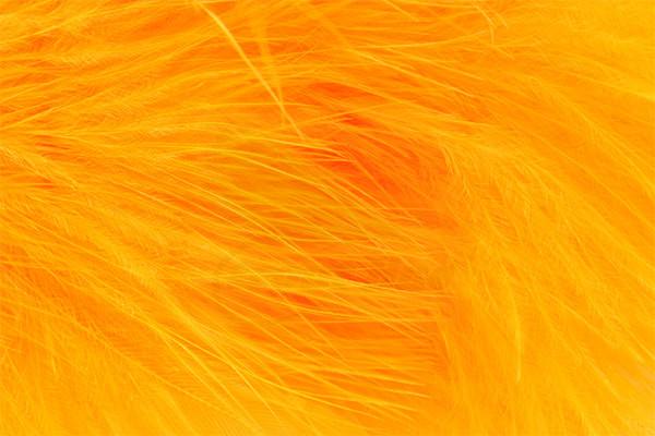 Sunburst Marabou